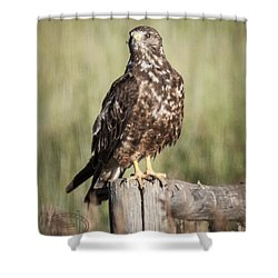 Shower Curtain featuring the photograph Immature Northern Harrier by Daniel Hebard