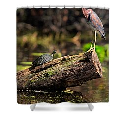 Immature Tri-colored Heron And Peninsula Cooter Turtle Shower Curtain by Matt Suess