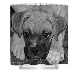 Impawsible Shower Curtain by DigiArt Diaries by Vicky B Fuller
