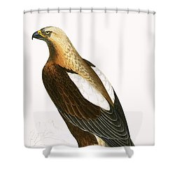 Imperial Eagle Shower Curtain by English School