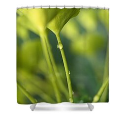 Shower Curtain featuring the photograph In A Forest Of Spurge  by Connie Handscomb