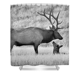 Shower Curtain featuring the photograph In Charge by Kelly Marquardt