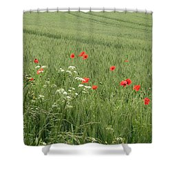 in Flanders Fields the  poppies blow Shower Curtain