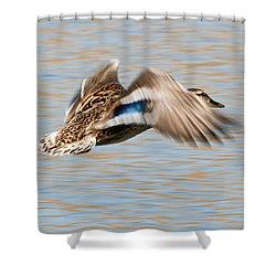 In Flight Shower Curtain by Anita Oakley
