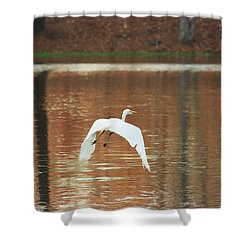 Shower Curtain featuring the photograph In Flight by Kim Henderson