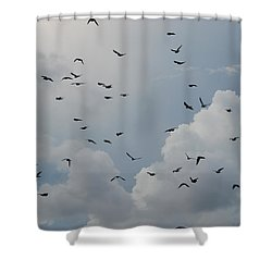 In Flight Shower Curtain by Rob Hans