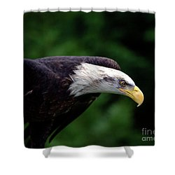In For The Kill Shower Curtain