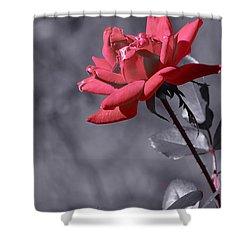 In Full Bloom 2 Shower Curtain by Warren Thompson