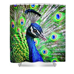 In Full Display Shower Curtain