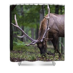 In Full Velvet Shower Curtain