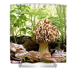 In Hiding - Morel Mushroom Shower Curtain by Angie Rea