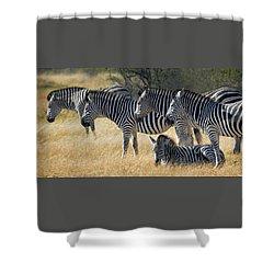 In Line Zebras Shower Curtain