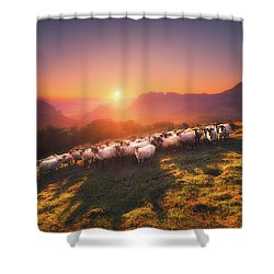In Saibi With Companionsheep Shower Curtain
