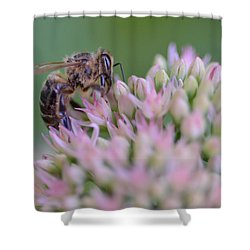 In Search Of Nectar Shower Curtain
