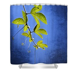 Shower Curtain featuring the photograph In The Blue by Carolyn Marshall