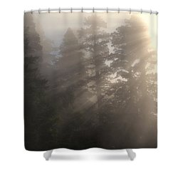 In The Bright Shower Curtain