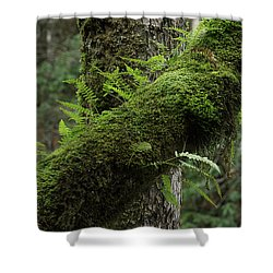 Shower Curtain featuring the photograph In The Cool Of The Forest by Mike Eingle