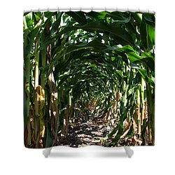 In The Corn  Shower Curtain by Joanne Coyle