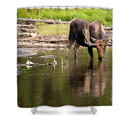 Shower Curtain featuring the photograph In The Drink by Aaron Whittemore