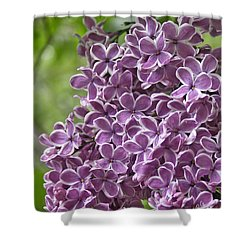 In The Garden. Lilac Shower Curtain by Ben and Raisa Gertsberg