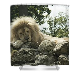 In The Jungle Shower Curtain by Roger Lighterness