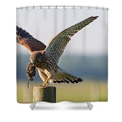 In The Kestrel's Beak Shower Curtain by Torbjorn Swenelius