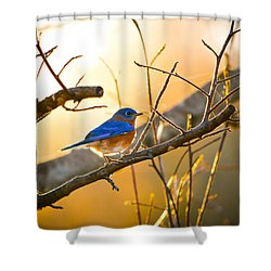 In The Light Shower Curtain by Shelby  Young
