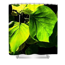In The Limelight Shower Curtain by Will Borden