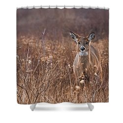 Shower Curtain featuring the photograph In The Meadow by Robin-Lee Vieira