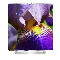 In The Purple Iris Shower Curtain by Lyle Crump
