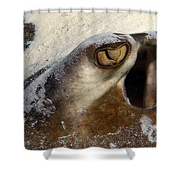 In The Sand Shower Curtain by Aaron Whittemore
