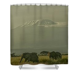 Shower Curtain featuring the photograph In The Shadow Of Kilimanjero by Gary Hall