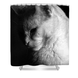 In The Shadows Shower Curtain by Bob Orsillo