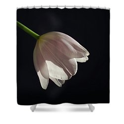 Shower Curtain featuring the photograph In The Spotlight by Kim Hojnacki
