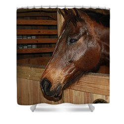 Shower Curtain featuring the painting In The Stall by Roena King
