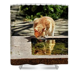 In The Summer Heat Shower Curtain by Stephan Grixti
