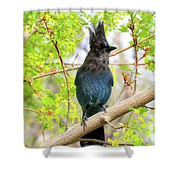 Shower Curtain featuring the photograph In The Swing Of Spring by Donna Kennedy