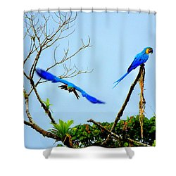 In The Wild Shower Curtain by Karen Wiles
