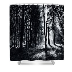 In The Woods 6 Shower Curtain