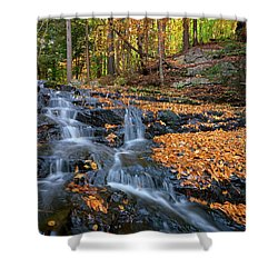 In The Woods Shower Curtain by Rick Berk