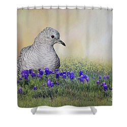 Inca Dove  Shower Curtain by Bonnie Barry
