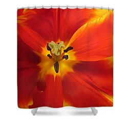 Incandescence Shower Curtain by Jessica Jenney