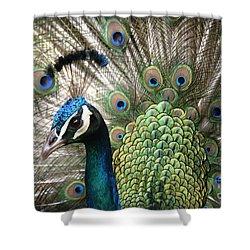 Indian Blue Peacock Puohokamoa Shower Curtain by Sharon Mau