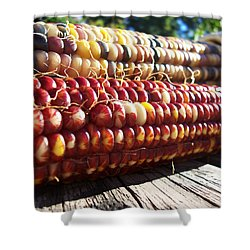 Shower Curtain featuring the photograph Indian Corn On The Cob by Shawna Rowe