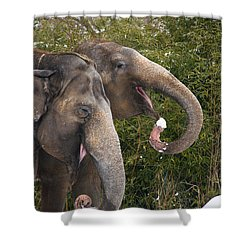 Indian Elephants Eating Snow Shower Curtain