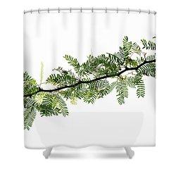 Indian Needle Bush Tree Leaves Shower Curtain