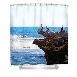 Indian Ocean Birds Resting On Rocks Shower Curtain
