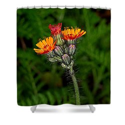 Indian Paint Brush #2 Shower Curtain