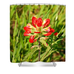 Indian Paintbrush Close Up Shower Curtain
