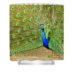 Indian Peacock Shower Curtain